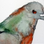 Red Eyed Pigeon