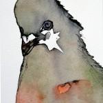 Star Pigeon