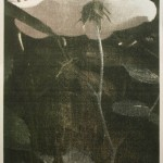 Rose Garden (#3)