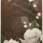 Rose Garden (#2)